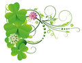 Shamrocks clover tendril colorful realistic green Stock Photos