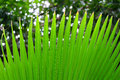 Shape green palm leaves Royalty Free Stock Photo