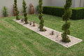 Shaped conifer shrubs pruned and in a small rectangular pebble garden surrounded by lawn Stock Image