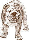 Shar pei vector drawing of a chinese Royalty Free Stock Photo