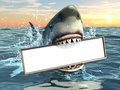Shark advertising Royalty Free Stock Photo