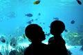 Shark Bay in Sea World Gold Coast Queensland Australia Royalty Free Stock Photo