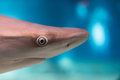 Shark eye close up detail macro ready to attack Royalty Free Stock Photo