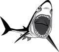 Shark fish head