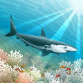 The shark floats over a coral reef with school of clown fishes against ocean background Royalty Free Stock Photography