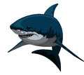 Shark, illustration Stock Photography