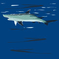 Shark illustration drawn vector background on sea depth Stock Images