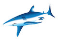 The shark is an illustration of on a white background Royalty Free Stock Photography