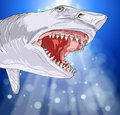 Shark with open mouth Royalty Free Stock Photo