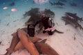 Shark pack a of lemon sharks congregate around a bait box Stock Photos