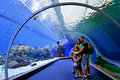 Shark Pool of Coral World Underwater Observatory aquarium in Eil Royalty Free Stock Photo