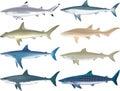 Sharks Species