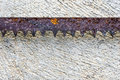 The sharpness of saw blade is old and rusty Royalty Free Stock Photo