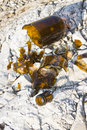 Shattered beer bottle resting on the ground Royalty Free Stock Photo