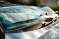 Shattered windscreen of a car in an accident close up the and wipers that has been involved Stock Image