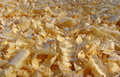 Shavings Royalty Free Stock Photography