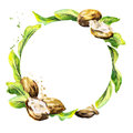 Shea nuts and green leaves circular background. Watercolor illustration