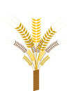 Sheaf with ears of wheat tied a ribbon Stock Photos