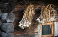 Sheaf of garlic hanging on the wall of the old hut Stock Photos