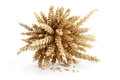 Sheaf of ripe wheat Stock Photography
