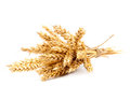 Sheaf of wheat ears on white background. Royalty Free Stock Photo