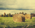 Sheaves of hay lying in a field. Royalty Free Stock Photo