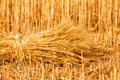 Sheaves of ripe wheat sheaf golden Stock Image