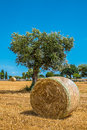Sheaves of straw apulia region corn in the countryside south italy Royalty Free Stock Image
