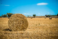 Sheaves of straw apulia region corn in the countryside south italy Stock Photography