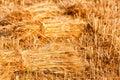 Sheaves of wheat sheaf ripe golden Stock Photo
