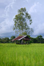 Shed house on the rice field clould background sky made form wood for rest and prepare work in of farmer Royalty Free Stock Photos