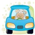 Sheep In A Car