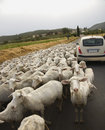 Title: Sheep and Car on Rural Road