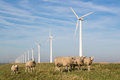 Sheep at a dike along a row of wind turbines dutch Stock Images
