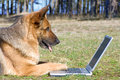 Sheep-dog laying on the grass with laptop Stock Images
