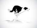 Sheep dog running image graphic style of on white background Royalty Free Stock Photography