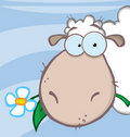 Sheep eating a flower over blue Stock Photos