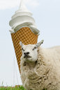 Sheep in front of ice cream Royalty Free Stock Photo