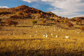 Sheep on grassland Stock Photography