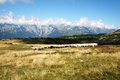Sheep grazing in mountain italy Royalty Free Stock Photography