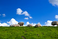 Sheep on green pasture over blue sky Royalty Free Stock Photo