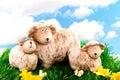 Sheep with lambs Royalty Free Stock Photo