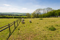 Sheep on a meadow rural landscape of british countryside worcestershire uk Stock Photo