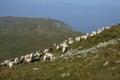 Sheep on mountain peaks, skyline landscape Royalty Free Stock Photo