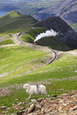 Sheep and mountain railway from the llanberis pass mount snowdon snowdonia wales uk Stock Photo