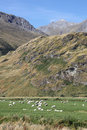 Sheep in mountains Stock Image