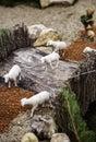 Sheep in a nativity scene Royalty Free Stock Photo