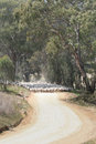 Sheep on outback road a flock of merino are walking along an in australia Stock Image