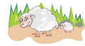 Sheep or Ovis aries, illustration Stock Photography