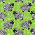 Sheep pattern vector background curly fluffy on the field Stock Images